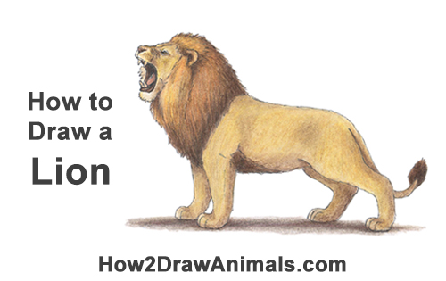How to Draw a Lion Color Side Roar Roaring