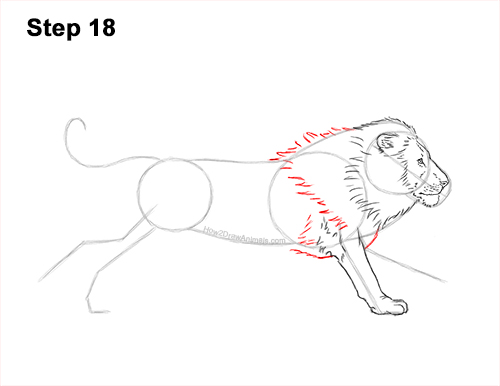 How to Draw Male Lion Running Side 18