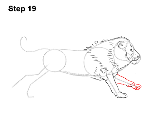 How to Draw Male Lion Running Side 19