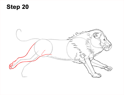How to Draw Male Lion Running Side 20