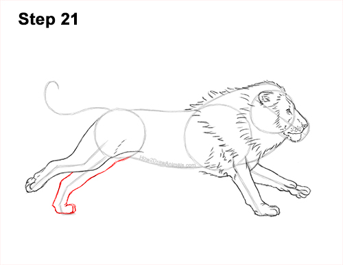 How to Draw Male Lion Running Side 21