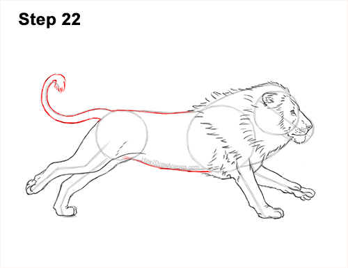 How to Draw Male Lion Running Side 22