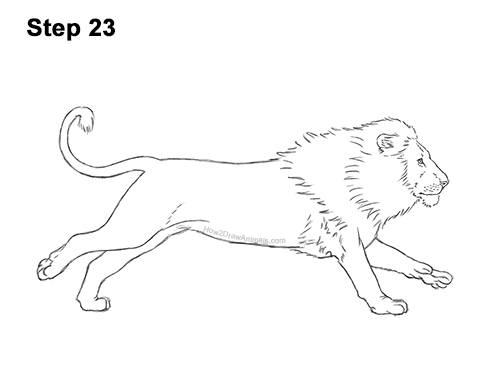 How to Draw Male Lion Running Side 23