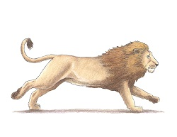 How to Draw a Lion Running Color Side