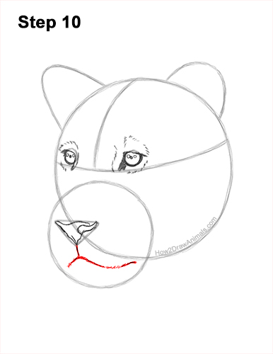 How to Draw a Lioness Head Face Portrait 10