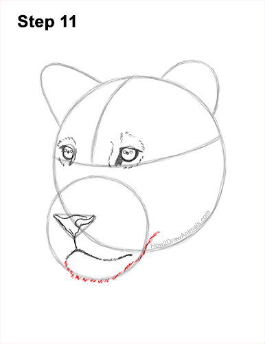 How to Draw a Lioness Head Face Portrait 11