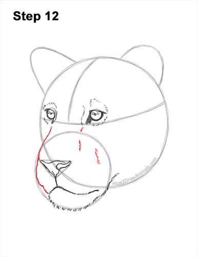 How to Draw a Lioness Head Face Portrait 12