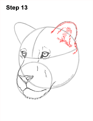How to Draw a Lioness Head Face Portrait 13