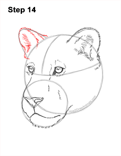 How to Draw a Lioness Head Face Portrait 14