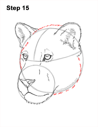 How to Draw a Lioness Head Face Portrait 15