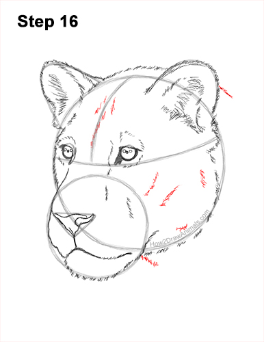 How to Draw a Lioness Head Face Portrait 16