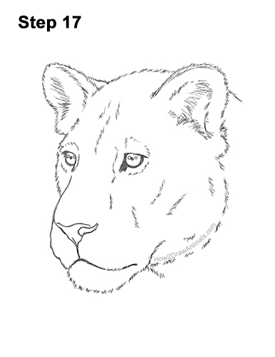 How to Draw a Lioness Head Face Portrait 17