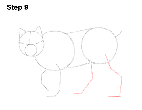 How to Draw Canada Lynx Cat Bobcat Wildcat 9