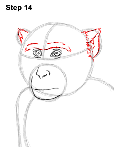 How to Draw a Rhesus Macaque Monkey Sitting 14