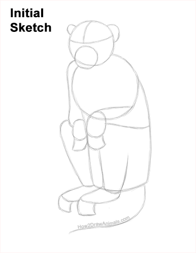 How to Draw a Rhesus Macaque Monkey Sitting Guides Lines