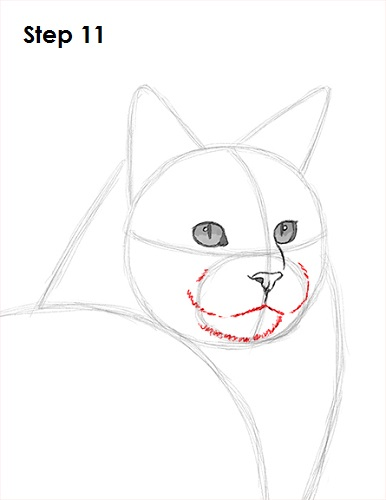 Draw Maine Coon Cat 11