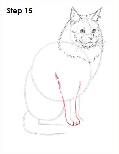 Draw Maine Coon Cat 15
