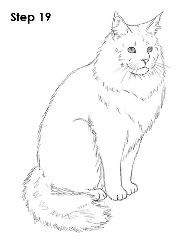 Draw Maine Coon Cat 19