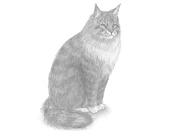 How to Draw a Maine Coon Cat Sitting