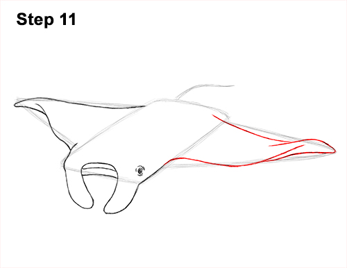 How to Draw Giant Oceanic Manta Ray 11
