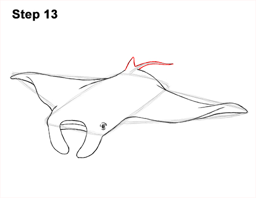 How to Draw Giant Oceanic Manta Ray 13