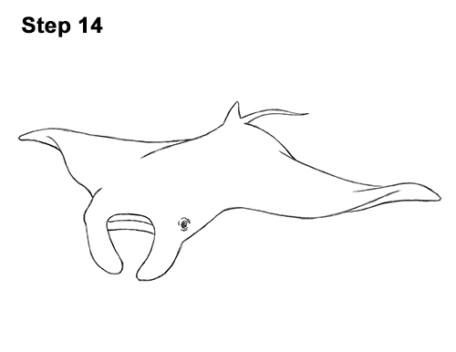 How to Draw Giant Oceanic Manta Ray 14