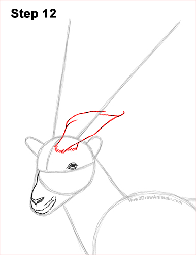 How to Draw a Bukharan Markhor Male Side View 12