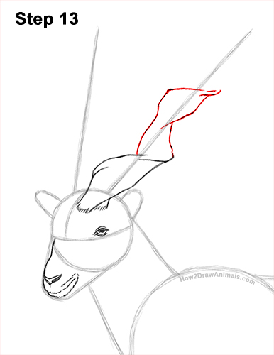 How to Draw a Bukharan Markhor Male Side View 13