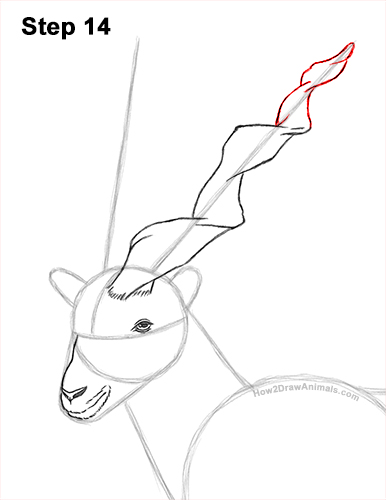How to Draw a Bukharan Markhor Male Side View 14