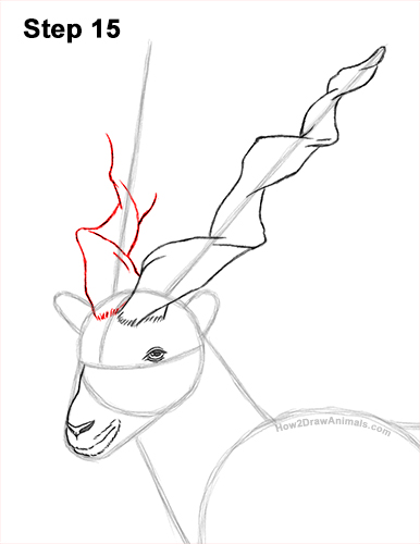 How to Draw a Bukharan Markhor Male Side View 15