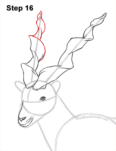 How to Draw a Bukharan Markhor Male Side View 16