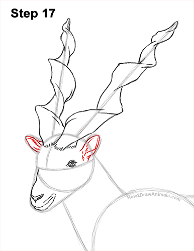 How to Draw a Bukharan Markhor Male Side View 17