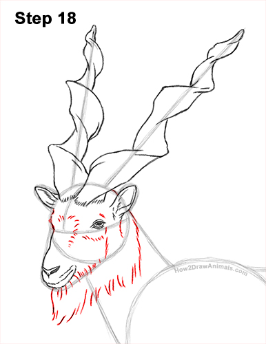 How to Draw a Bukharan Markhor Male Side View 18