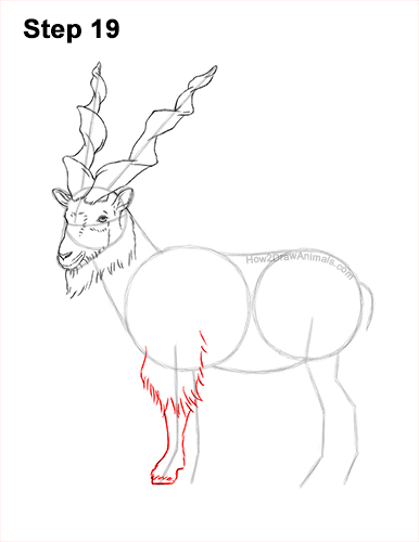 How to Draw a Bukharan Markhor Male Side View 19