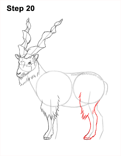 How to Draw a Bukharan Markhor Male Side View 20