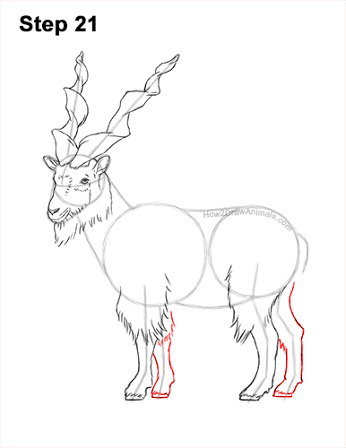 How to Draw a Bukharan Markhor Male Side View 21