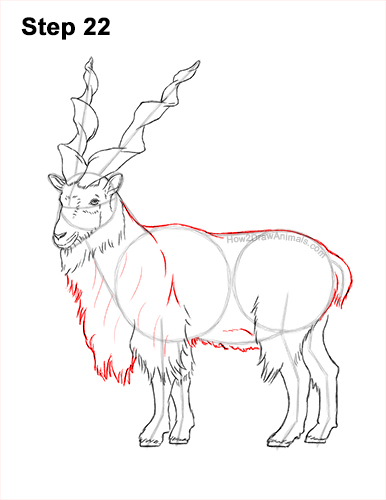 How to Draw a Bukharan Markhor Male Side View 22