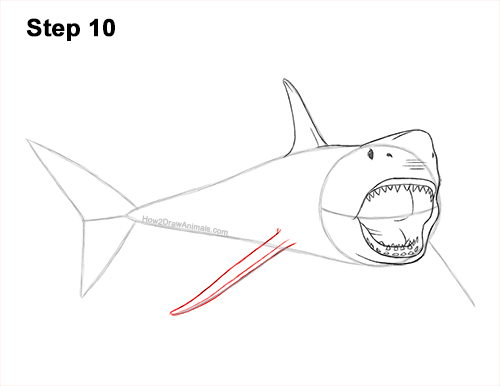 How to Draw a Megalodon Shark Open Mouth 10