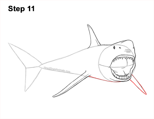 How to Draw a Megalodon Shark Open Mouth 11
