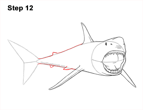 How to Draw a Megalodon Shark Open Mouth 12
