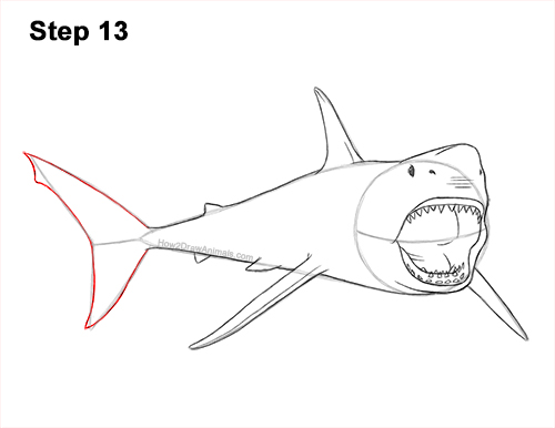 How to Draw a Megalodon Shark Open Mouth 13
