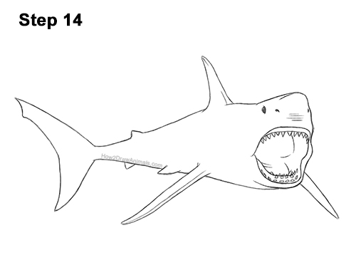How to Draw a Megalodon Shark Open Mouth 14