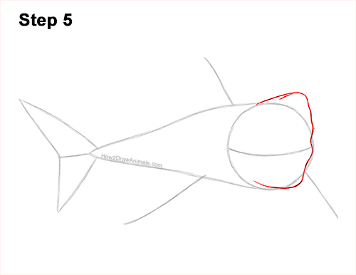 How to Draw a Megalodon Shark Open Mouth 5