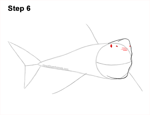 How to Draw a Megalodon Shark Open Mouth 6