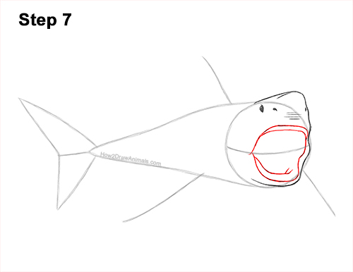 How to Draw a Megalodon Shark Open Mouth 7