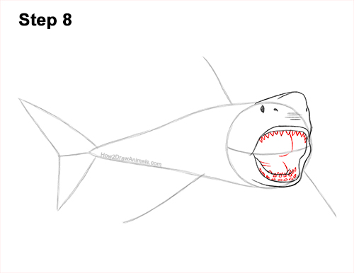 How to Draw a Megalodon Shark Open Mouth 8