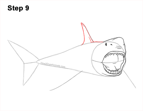 How to Draw a Megalodon Shark Open Mouth 9