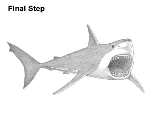 How to Draw a Megalodon Shark Open Mouth