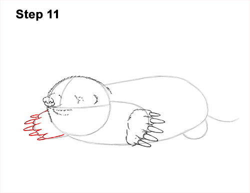How to Draw a Common European Mole Side 11