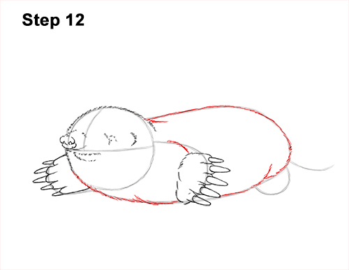How to Draw a Common European Mole Side 12